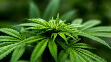 cropped-blur-cannabis-close-up-606506.jpg