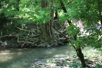 IMG_0059 Roots